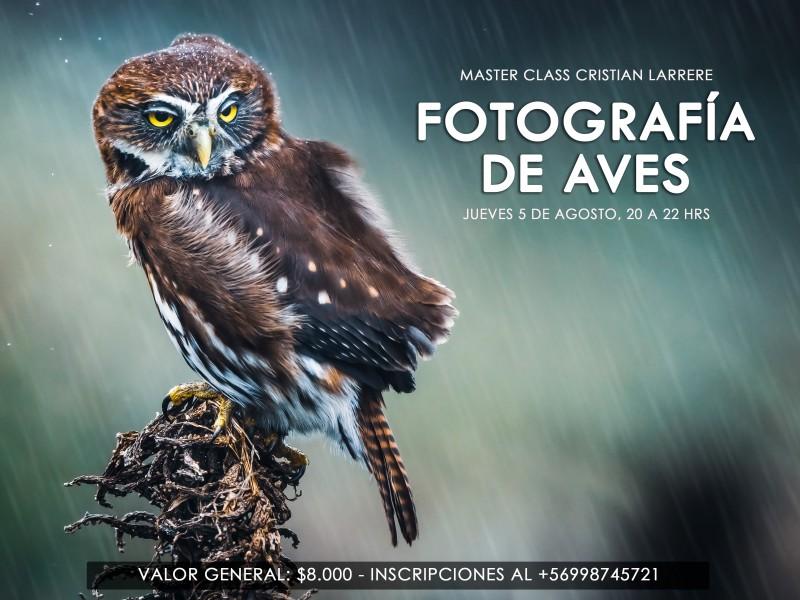 MASTER CLASS FOTOGRAFÍA DE AVES